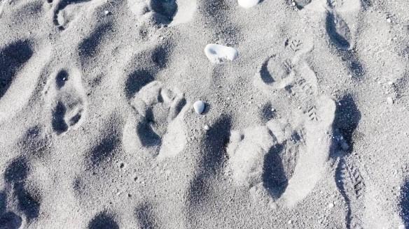 Bear paws???