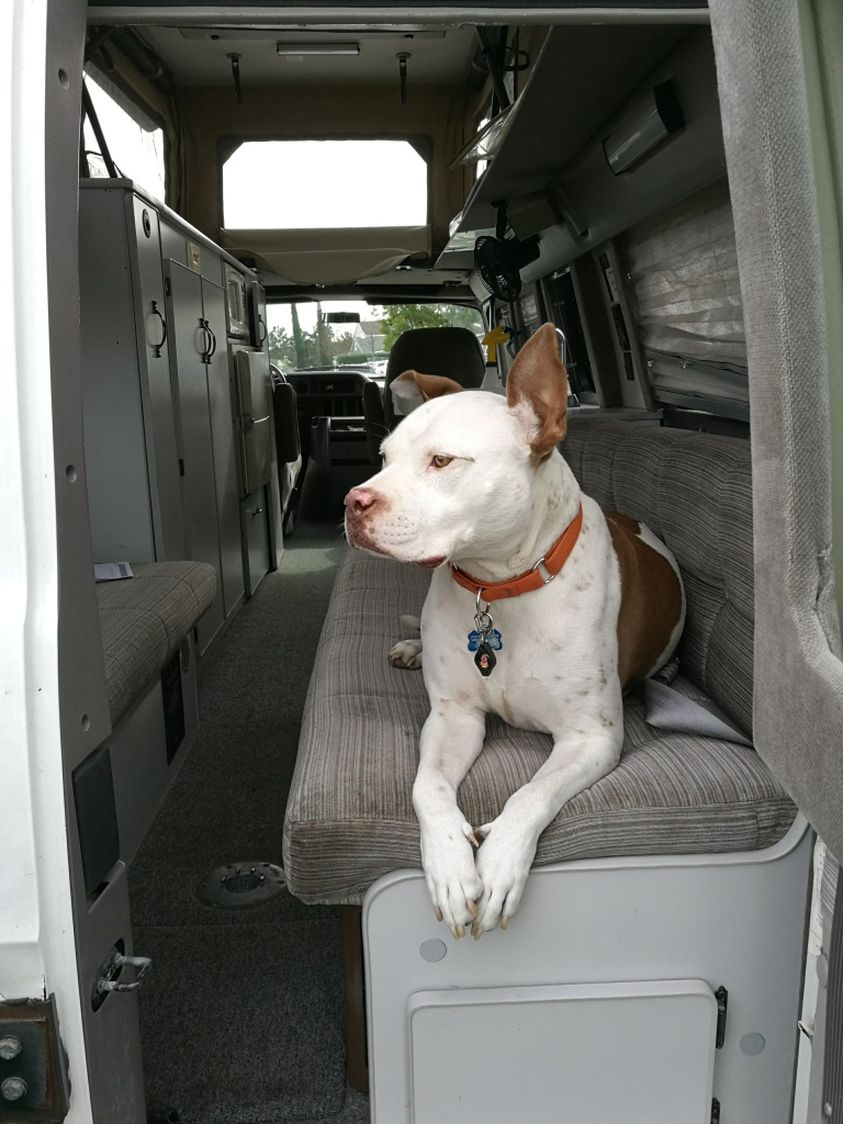 Sportsmobile, Dog