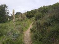 Pawfoot Trail